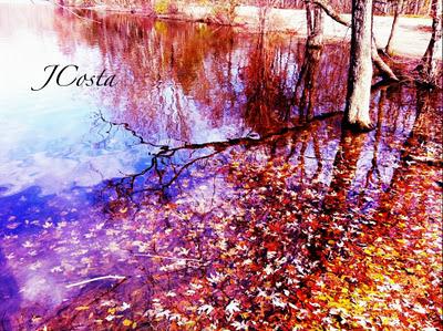 Find beauty in natures debris