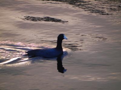 FLORIDA 2011 300