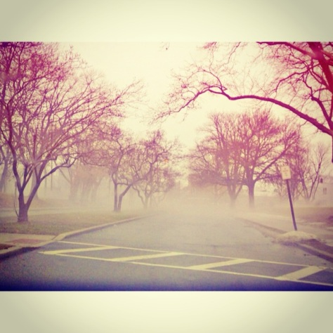Find beauty in the fog
